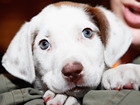 Efforts in Ohio aimed at dog breeder regulations