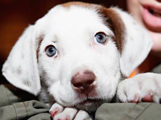 CDC: Petland puppies sicken 18 people in Ohio