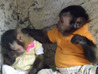 Monkey love: watch Capuchin console its pal