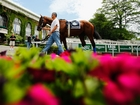Horse racing doesn't need a Triple Crown winner