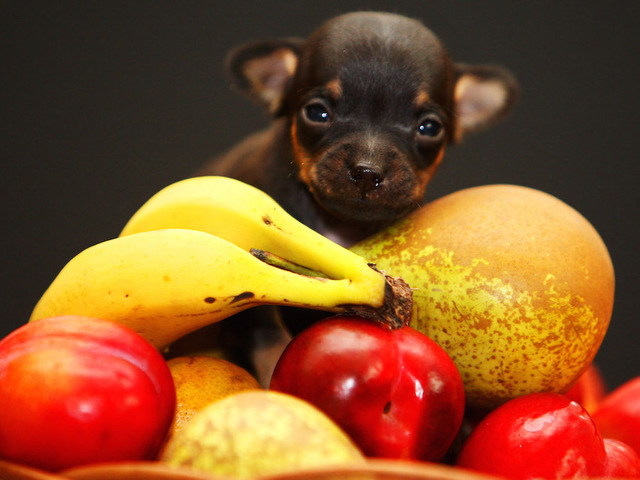 What Fruit Can Dogs Eat Safely