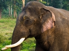 Girl dies after elephant throws rock inside zoo