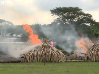 Kenya sends ivory poachers a burning message