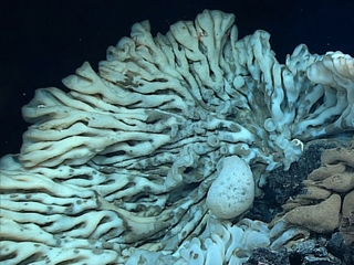 This sponge might be bigger than your car