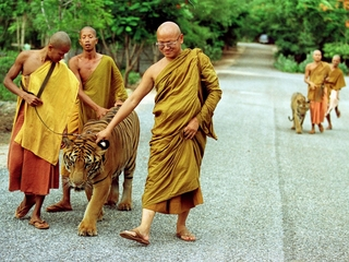 Thailand's 'Tiger Temple' may soon be tigerless