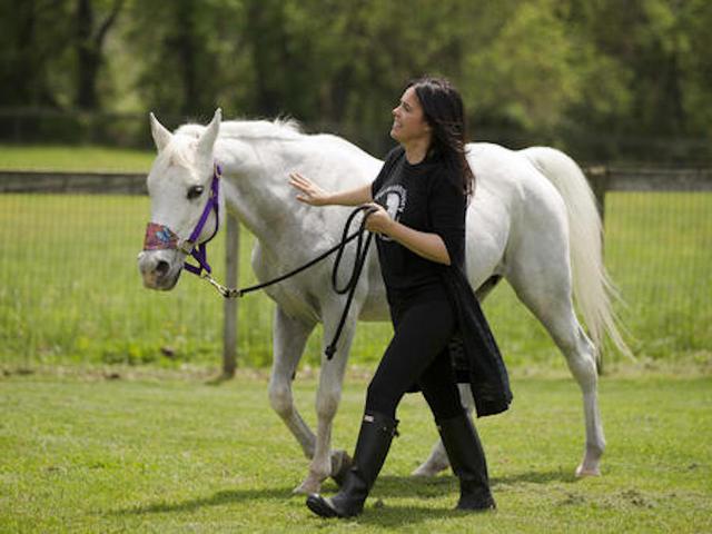 Jon Stewart's Adopted Horse Lily Dies