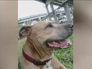Florida man's dog dies in alligator attack