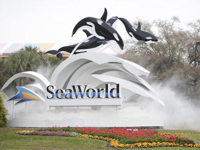 Dolphin snatches woman's iPad at SeaWorld, dumps it in water